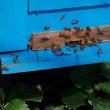 イチゴハウスのスズメバチ駆除