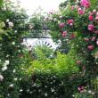 薔薇の花園・・・ 港の見える丘公園