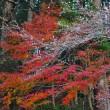 美しい自然 (南伊勢町斉田)