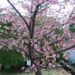 春、1号。