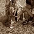 吾輩は猫背である