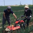 【開催案内・追加募集】「仙台井土ねぎオーナー2018」第二回作業体験会~ 土寄せ除草作業体験を開催します。
