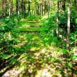 森の遊歩道(14)