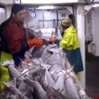 シーフードウォッチはオーストラリアのメロの奴隷労働を再評価