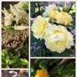 お花の綺麗な季節になってきました