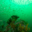 魚湧く逗子の海
