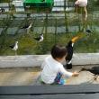 坊!!~掛川花鳥園~