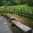 雨の鎌倉中央公園