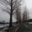 春山 寒風周りの赤坂山 2