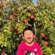 りんご狩り日和