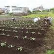 6月17日 本日は青柳若葉会でさつまいも畑の草取りを行いました