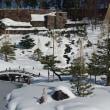 金沢市玉泉院丸庭園雪景色