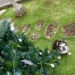 わが家のクリスマスツリー