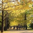 昭和記念公園の紅葉・黄葉