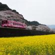 過去の写真~春の花風景