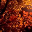 紅葉最高潮!