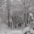 雪は、今日も降り続く…