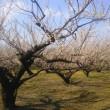 梅も桜もまだまだだった