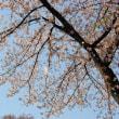 城下の舞桜。