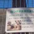 ☆可愛い王子動物園のカピバラさんたち
