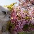 河津桜が葉桜に・・・