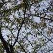 + 秋雨のジョグ・・・ 幸福実現党のポスターがな~い  支那文明の終焉とチャイニーズレプタリアンもろともに