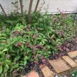 ハナミズキの紅葉とホトトギスの花