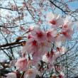 2018.03.18(日)花が咲き始めて・・・