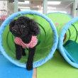 幼稚園体験にきてくれた【ルークくん】  犬のしつけ教室@アロハドギー
