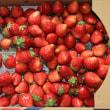 イチゴも終わり