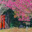 21/May 緋寒桜と地球外惑星とカワセミ