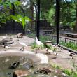 井の頭自然文化園。