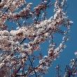春到来サンデー