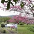 動画 桜にメジロ2019 奄美 フォレストポリス