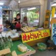 今年も昭和村のトウモロコシはじまりました。