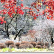 残、冬桜と紅黄葉