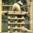 上野動物園~横浜中華街