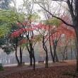 今朝の森の図書館周辺 霧が深かったですね~