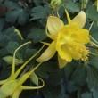 [徒然日記] ベランダの花
