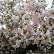 桜の後の花二題
