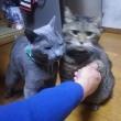 猫でもお手をする