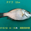 笑転爺の釣行記 8月18日☀☁☂ 浦賀港岸壁