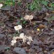 路傍脇の種々の茸【大半が毒キノコ】