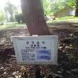 上野の森🌳狂想曲⁉