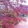 これこそ最後の最後の紅葉風景