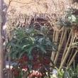 初打ちと新春の庭等々