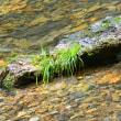 水の有る風景ー55