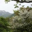 満開のシロヤシオを眺めに那須・中の大倉山へ