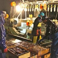 スルメイカの漁獲状況(7月上旬)日本海の桧山が好漁