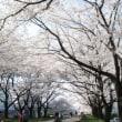 桜は満開、気持ちは・・・